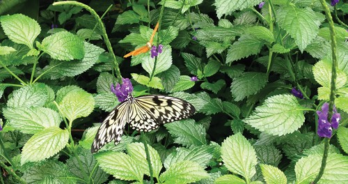 Photo of butterfly.